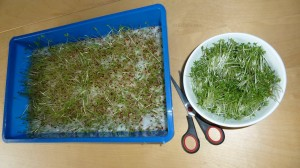 Cress_soup2_cut