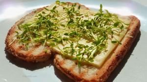 cress_bread_sandwich_cheese
