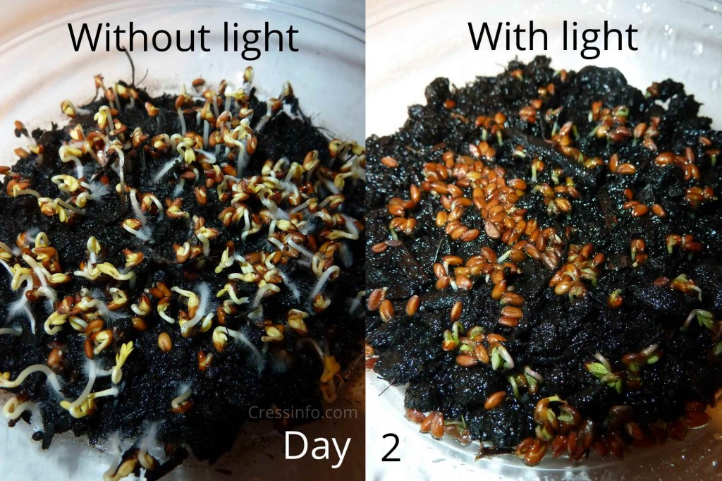 cress_dark_vs_light_day5