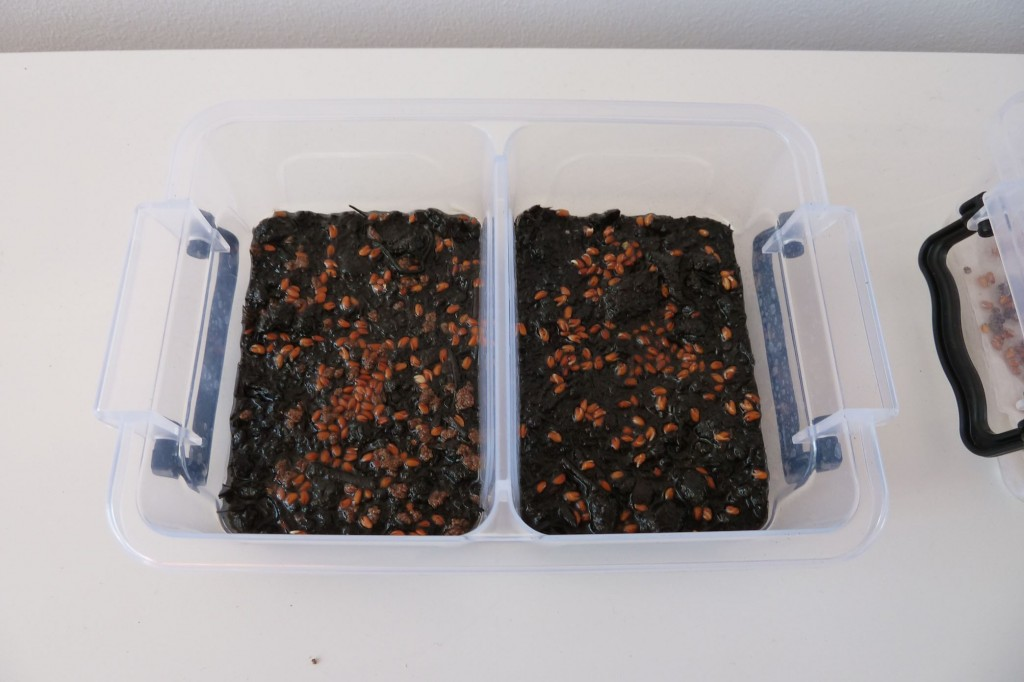 cress_soil_fertilizer_day1